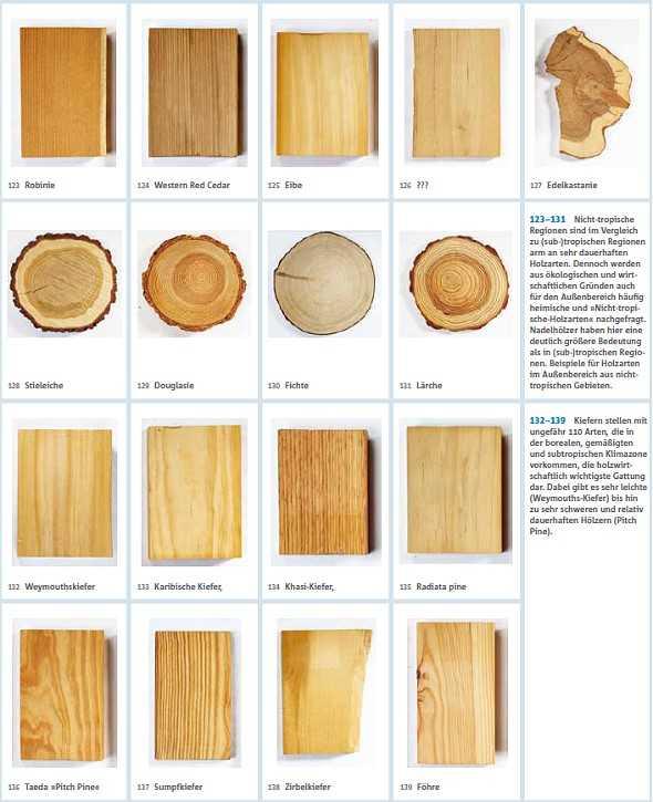 Holzarten Erkennen holzarten welches holz ist das richtige fr den auenbereich walter