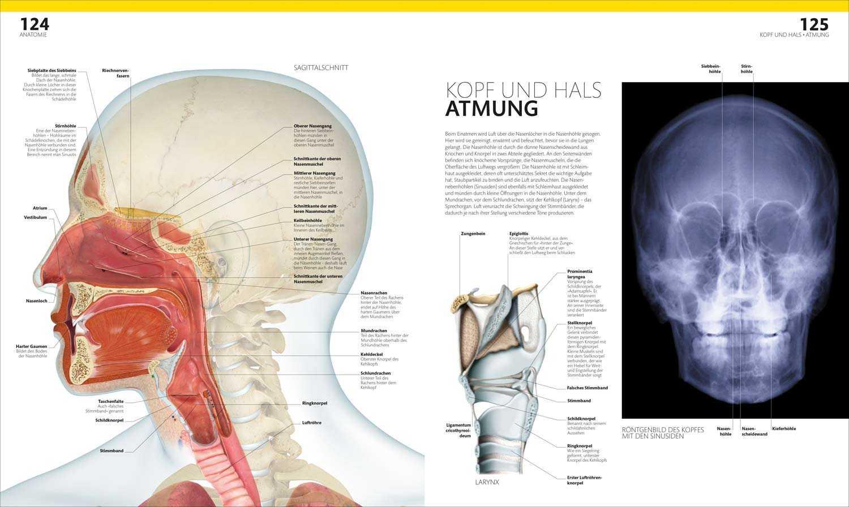Groß Anatomie Der Nase Bilder - Menschliche Anatomie Bilder ...